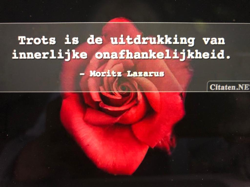 Quote   Dolfijnwellness